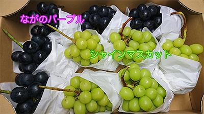 収穫の季節【ぶどう編】