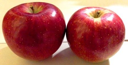 リンゴの収穫まっさかりです!