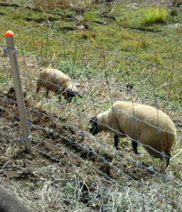 山羊や羊の放牧のメリット