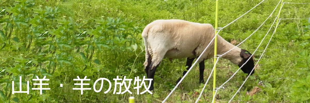 山羊や羊の放牧