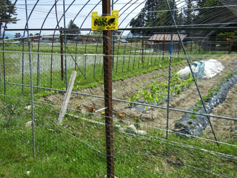 亀甲金網+電気柵(5段張り)