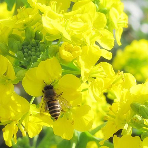 信州金井養蜂場