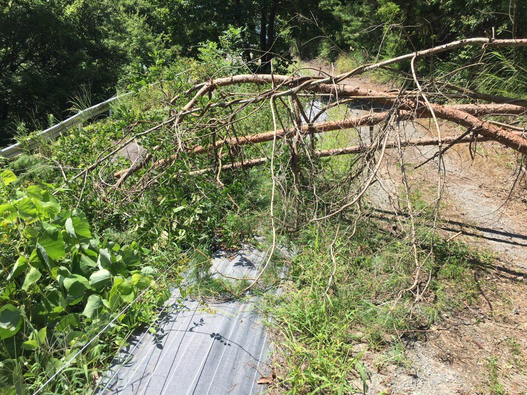 電気柵の漏電、倒木