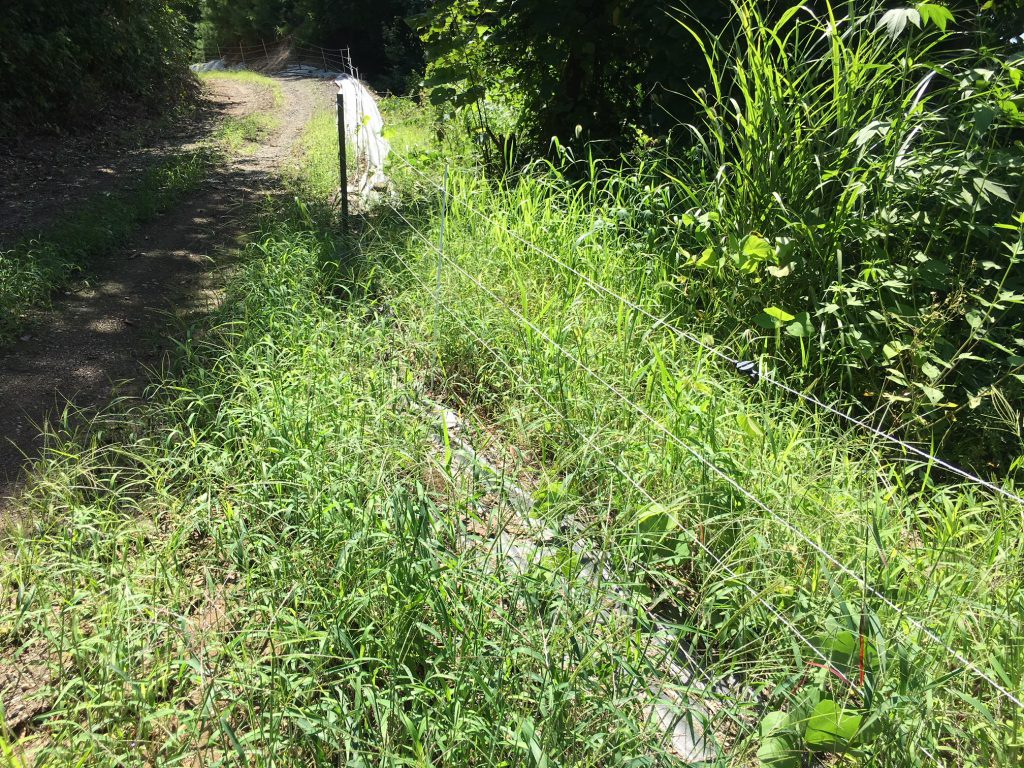 電気柵の漏電、草