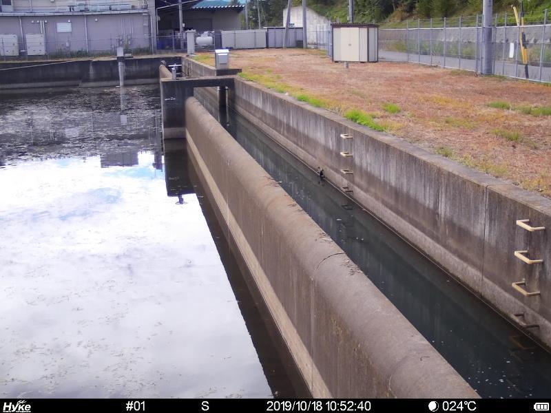 貯水池を監視するIoT自動撮影カメラ