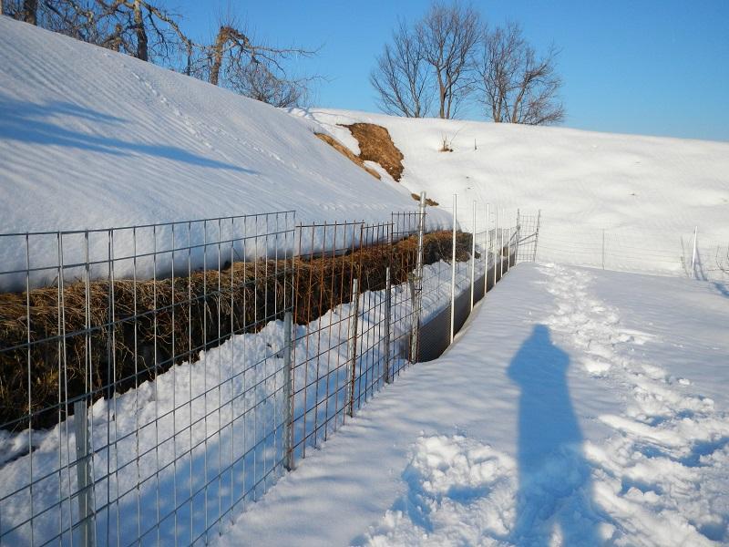 降雪時のトタンフェンス