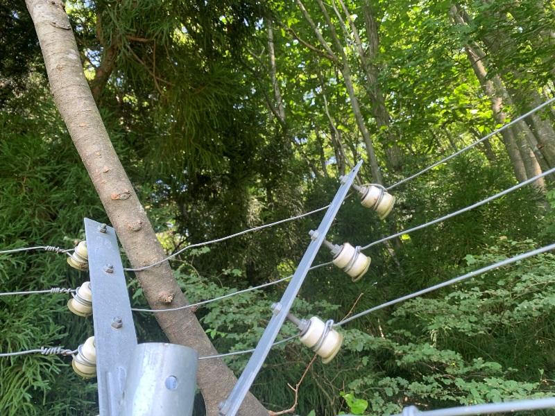 電気柵倒木